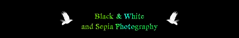 Black & White and Sepia Photography